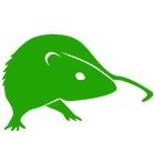 extermination de nuisible - des rats souris et autre rongeurs - Dératisation